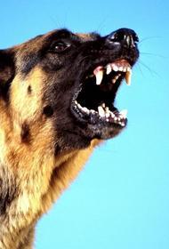 За укус собаки ответят хабаровские чиновники