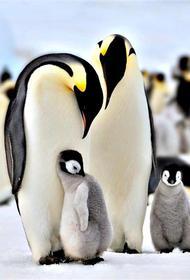 25 апреля - Всемирный День пингвинов (World  Penguin Day)