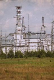 Физик Яценко развеял мифы о животных-мутантах в Чернобыльской зоне отчуждения