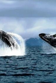 В России планируют запретить добычу китов, дельфинов и морских свиней