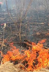 Лесные пожары угрожают Нижегородской области