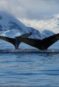 Землю перегревают: парниковые газы, потеплевший океан и тектоническая активность – это приговор планете?