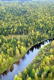 Необходимо  2,5 гектара леса, чтобы поглотить 1 тонну углерода