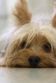 Жительница Ярославля нашла свою сбежавшую собаку спустя 4 года