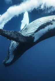 Мишустин поддержал законопроект о запрете рыболовства на китообразных
