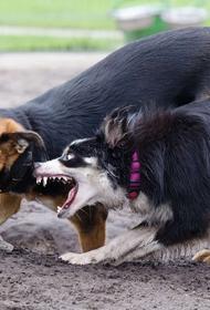 В Мурманске стая собак напала на девочку: зафиксировано более 100 укусов