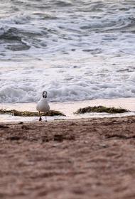 В Азовском море ищут места для скважин, чтобы обеспечить Крым пресной водой