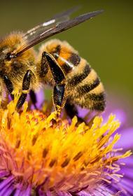 В Нидерландах провели национальную перепись пчел
