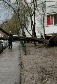 Сотрудники МЧС предупредили москвичей о сильном ветре в четверг