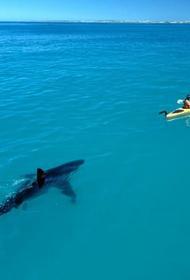 Око за око, зуб за ногу. Сёрфер отстоял свое право в суде оставить себе зуб акулы как трофей за потерянную конечность