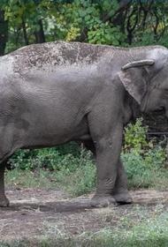 В США слониха судится с зоопарком из-за принудительного содержания в неволе