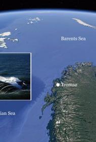 Атомная субмарина ВМС США зайдет в Норвежский порт, расположенный в 562 км от Мурманска
