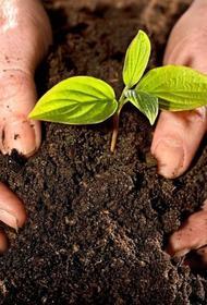 Власти Великобритании объявили о новой программе по поддержке экологии