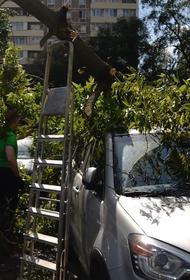 Из-за сильного ветра в Москве упали два дерева