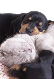 Депутат Мосгордумы Мельникова и член ОП РФ Разворотнева провели открытый вебинар о содержании домашних животных