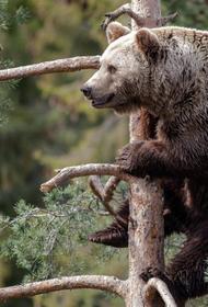 В российских лесах увеличилась численность хищников