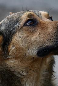 В Хабаровске поймали живодера, торговавшего мясом собак
