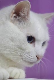 Эрмитажный кот Ахилл будет предсказывать матчи на Евро-2021