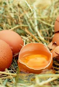 В Минсельхозе прокомментировали информацию «Росптицесоюза» о возможном дефиците куриных яиц