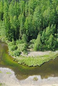 В Тунгусском заповеднике разрешили охоту. Природная территория в Красноярском крае внезапно потеряла статус особо охраняемой