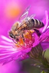 Пчёлы начали строить гнезда полностью из пластиковых отходов