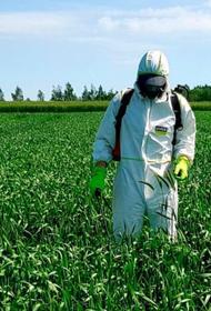 Сельскохозвредителей предложили уничтожать отходами от производства пива