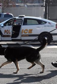 В американском штате Вирджиния собак досрочно отправили на пенсию — всему виной легализация марихуаны