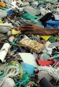 Россия сделала шаг к биопластику