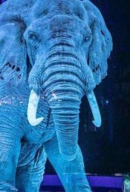 Немецкий цирк использует голограммы в своих представлениях вместо живых животных