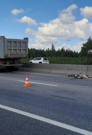«Прошу помочь и придать огласке этот страшный случай»: водитель грузовика, сбивший пенсионерку, может избежать наказания