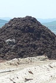 Гости приморского пляжа задыхаются от гниющих водорослей