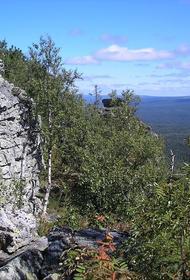 В тайге на Урале обнаружили пропавшего 4 июня мальчика