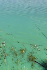 В Казани разбираются с загрязнением Архиерейского озера