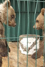 В Челябинск привезли медвежонка-сироту из Перми