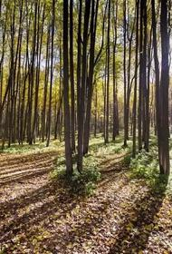 726 гектар реликтового леса в Подмосковье вырубят под застройку