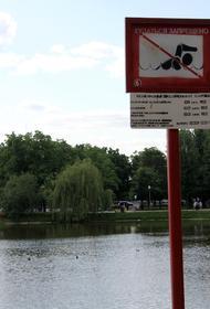 Врачи Болибок и Жемчугов предупредили, что купание в непроверенных водоемах может привести к дизентерии и гепатиту