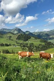 Швейцария отклонила законопроект об ограничении применения пестицидов
