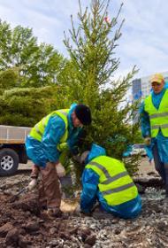 В Челябинске заменят все деревья и кустарники, которые погибли за зиму