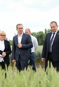 На поддержку АПК Кубани в 2021 году направили 8 миллиардов рублей