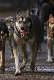 Как обезопасить себя от бездомных животных и наказать владельцев собак за нарушения их содержания