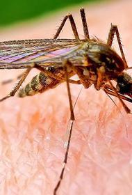 Как обезопасить себя от переносимых комарами вирусов