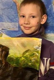11-летний художник из Арзамаса заработал для бездомных животных 500 тыс. рублей