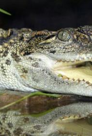 Глава Крыма Аксёнов поинтересовался у мэра Ялты, делали ли крокодилам при спасении искусственное дыхание