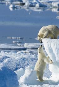 Александр Козлов: Минприроды может создать в Арктике систему мониторинга выбросов черного углерода и метана