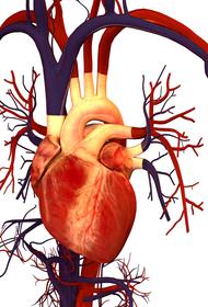 Врождённые пороки сердца можно определить в перинатальный период