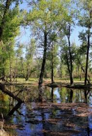 Представители природоохранных ведомств России дают добро на вырубку реликтовых лесов