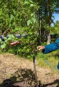 Волонтеры РМК высадили 25 тысяч деревьев