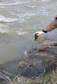 Отравление реки Охчучай Арменией - безответственность или экологический терроризм?