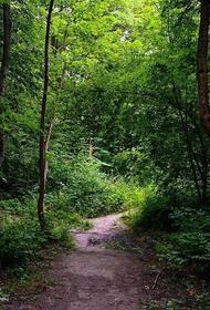 Губернатор Калининградской области передумал вырубать «Суздальский лес» после прямой линии Путина