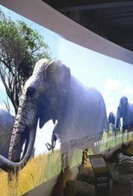 Первый в мире зоопарк с дополненной реальностью появится в Бристоле